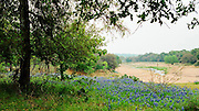 """Bluebonnets on a rise overlooking the Blanco River near Fredericksburg, Texas. NOTE: Click """"Shopping Cart"""" icon for available sizes and prices. If a """"Purchase this image"""" screen opens, click arrow on it. Doing so does not constitute making a purchase. To purchase, additional steps are required."""