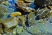 Tidal sea water on rocks and stones shingle, Kilkee, County Clare, West Coast of Ireland