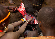 Omo Valley, Ethiopia, Bodi men sacrifice a cow. To celebrate Kael, the Bodi tribe's New Year, a cow is sacrificed and the elders read into its innards. No good fortune is foreseen for this year. The Bodis have to put up with the arrival of 5 more sugar cane production lines on their territory...