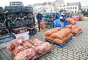 Unloading a catch of shellfish from a small fishing boat in the harbour, Ilfracombe, north Devon, England