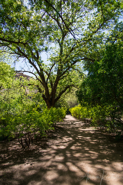 Spring in the desert, Phoenix, Arizona <br />
