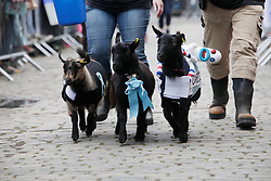 London 06/04/2014<br /> Three goats, Oxford (right), And (left), Cambridge (centre) race in the Spitalfields City Farm Goat Race that coincides with the Oxford and Cambridge Boat Race. The goat named And won.<br /> Photo: Anna Branthwaite/LNP