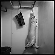 Bio-landwirtschaft unter anderem im Kanton Freiburg / Fribourg: Gemüseproduktion, Truten, Rinder oder Schweinemast, Hühner- und Schafzucht, Eierproduktion und Getreideherstellung nach den Richtlinien von BioSuisse. © Romano P. Riedo