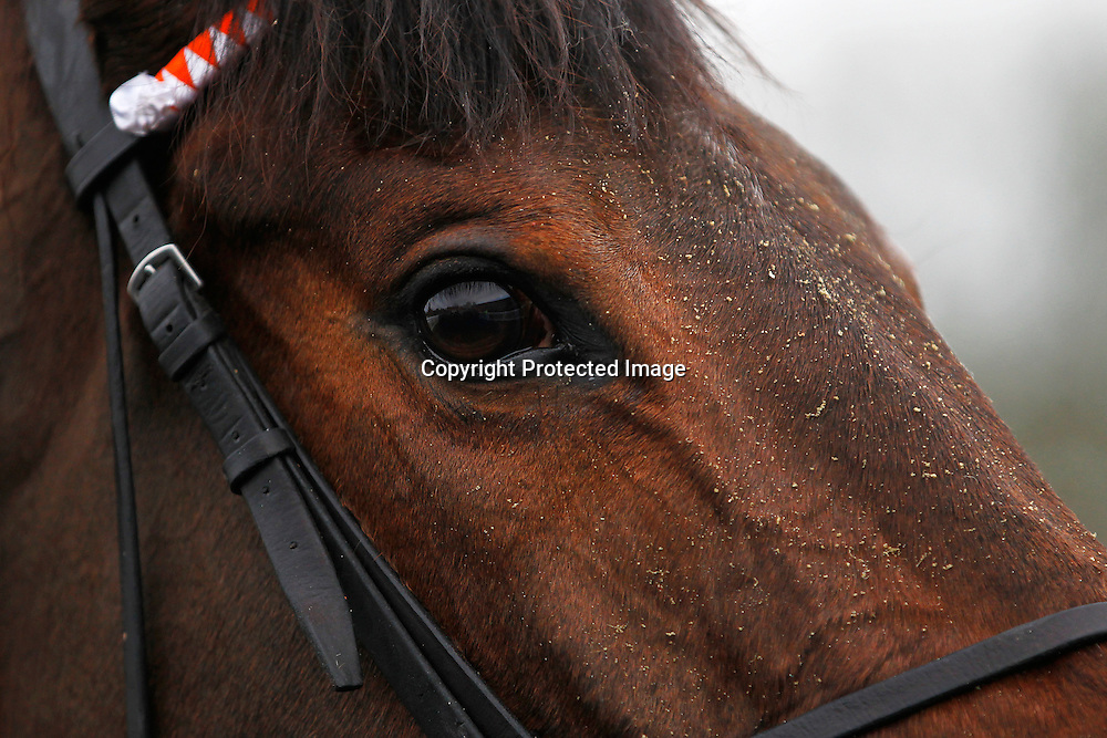 Estibdaad, William Twiston Davies, Precision Five, Fergus Sweeney