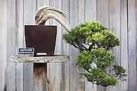 Bonsai in Japanese Garden at The Huntington Botanical Gardens, San Marino, California