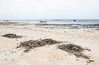 Raking beach detritus for tourism, Mombasa marine protected area, Kenya