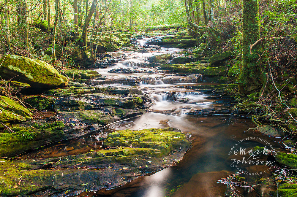 Little Nerang Creek (East Branch), Springbrook National Park, Gold Coast hinterland, Queensland, Australia