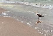 St. Petersburg Beach, Florida