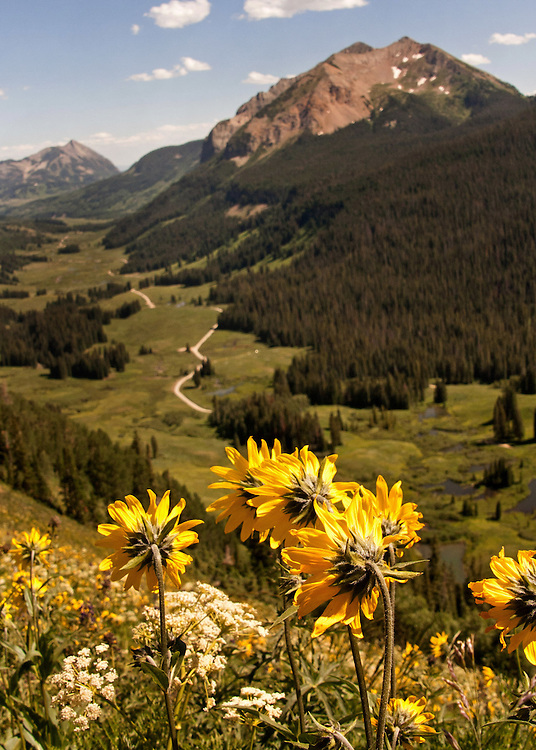 Gothic Valley near Crested Butte, CO.