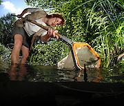 Regina Wilkes (Studentische Hilfskraft im IGB) Makrozoobenthos Bivalvia, Gastropoda
