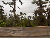 a swamp forest is seen beyond a concrete barrier on a highway in Louisiana, USA with tire marks on the barrier.