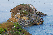 Rock crowded by pelicans and herons at Pachequilla island shore. Las Perlas archipelago, Panama province, Panama, Central America.