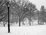 Central Park during the blizzard of 2016.