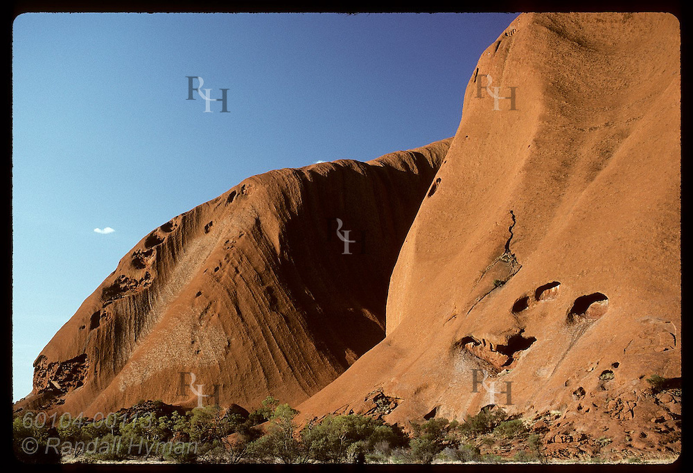 Red sandstone walls tower above trees at base of Ayers Rock; late afternoon, Uluru Natl Park Australia
