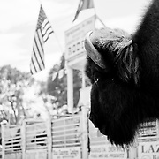 Two American icons on display at the 2011 Augusta Rodeo.