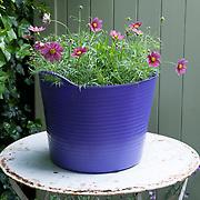 Trug of Flowers