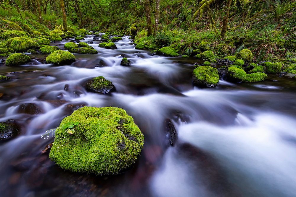 Gorton Creek in the Columbia River Gorge flows over and around the moss covered boulders.