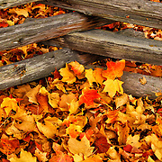 """Crossing the Maples""<br />