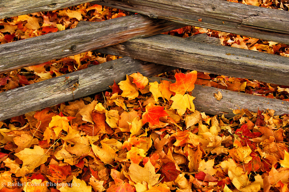 &quot;Crossing the Maples&quot;<br />