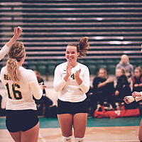 2nd year setter, Claire Douglas (4) of the Regina Cougars during the Women's Volleyball pre-season game on Sat Sep 22 at Centre for Kinesiology, Health & Sport. Credit: Arthur Ward/Arthur Images