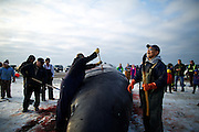 Men of all ages and a few women gather to butcher the first whale caught in this year's fall whaling season in Barrow, AK on September 22, 2014.