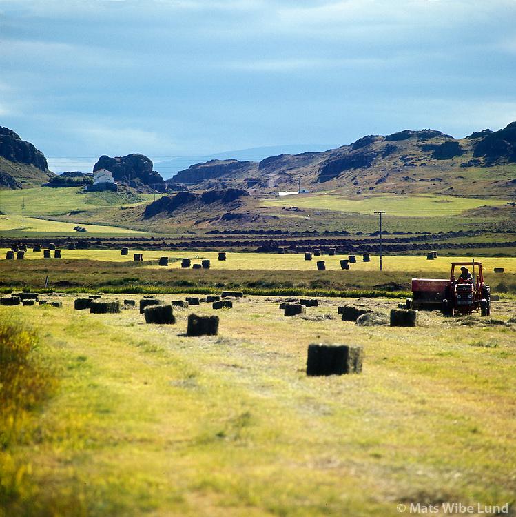 Heyskapur; Ekkjufell séð til suðurs, Fljótsdalshérað áður Fellahreppur / Haymaing at Ekkjufell - viewing south, Fljotsdalsherad former Fellahreppur.