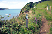 Coastal footpath Trefin, Pembrokeshire Coast national park, Wales