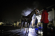 CYPRESS, CA - OCTOBER 27: California Chrome gets a bath after his final preparation for the Breeders' Cup Classic, working 6 furlongs in 1:12 1/5 seconds at Los Alamitos Race Track on October 27, 2016 in Cypress, California. (Photo by Alex Evers/Eclipse Sportswire/Getty Images)