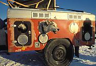 DEU, Germany, Siberian Husky in a special trailer.....DEU, Deutschland, Sibirischer Husky in einem Transport Anhaenger.........