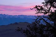 View of the White mountains with a bristlecone pine tree in the foreground. The bristlecone pine trees are the oldest known species of tree, living up to 5,000 years.