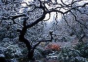 Japaenese Gardens, Portland, Oregon