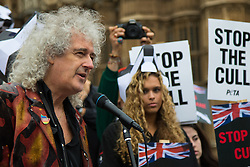 Westminster, London, September 8th 2015. Rock legend and renowned animal rights activist Brian May speaks at a protest outside Parliament, against government plans to continue culling badgers as a means of controlling bovine tuberculosis, despite indications that previous culls have had little to no effect.  // Contact: paul@pauldaveycreative.co.uk Mobile 07966 016 296