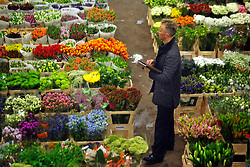 © Licensed to London News Pictures. 15/03/2012. London, UK. A stall holder looks over his flowers. The Mothering Sunday sales rush is on for flower growers, suppliers, florists and retailers amongst the Flowers at the New Covent Garden Flower Market on March 15th 2012 in London, England. New Covent Garden Flower Market is London's premier wholesale market stocking the widest range of flowers, plants and foliage in the UK. The run up to Mothers' Day is crucial in the flower selling calendar as Mothers' Day sales are condensed into about four days making the market very busy. Traditionally, Mothering Sunday was a day when children, mainly daughters, who had gone to work as domestic servants, were given a day off to visit their mother and family. Today, Mother's Day is a time when children give flowers and cards to their mothers, and generally pamper them..  Photo credit : Stephen SImpson/LNP