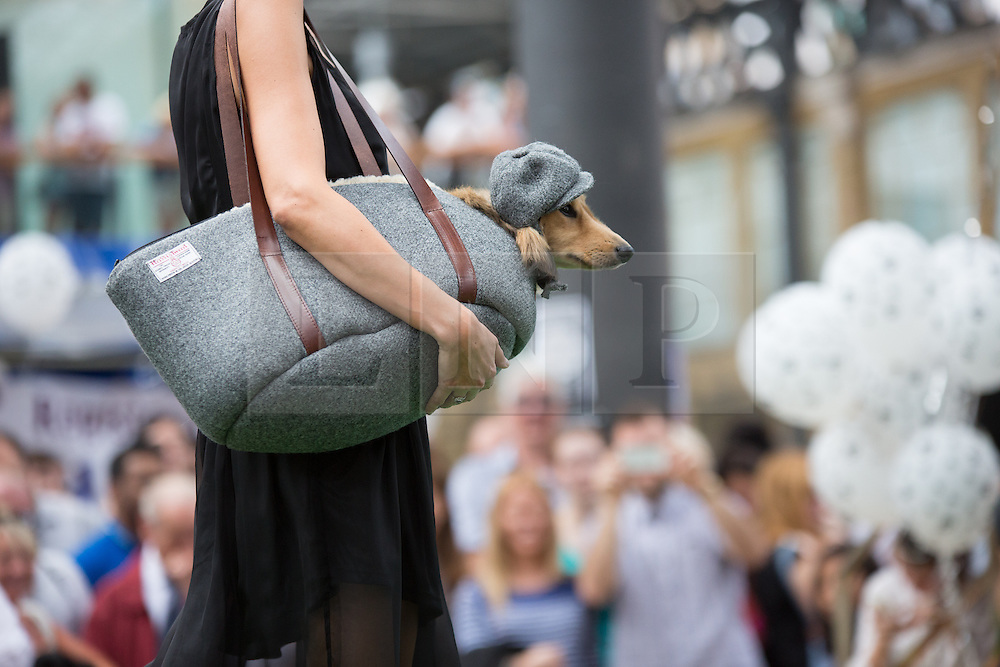 © Licensed to London News Pictures. 26/08/2013. London, UK. Dogs and people participate in the Paw Pageant 2013 held at Old Spitalfields Market in East London. Dogs wear designer fashion in a canine fashion show to raise money for Battersea Dogs and Cats home. Photo credit : Vickie Flores/LNP