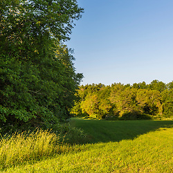 Early morning in a field near the Taunton River at a Wildlands Trust preserve in Raynham, Massachusetts.