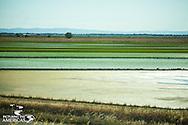 Northern California rice plantation