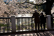Middleaged japanese couple enjoying the view of cherry trees on the bridge over the canal that surounds the palace in Tokyo.  Every spring during the few weeks of cherry blossoms, japanese people enjoy the beauty of cherry-tree flowers by having small parties or walks in the parks and other locations where these trees blossom.
