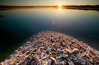 Shucked oyster shells from a local processing plant become small mountains that flow right back into the sea.  Fanny Bay, Vancouver Island, British Columbia, Canada.