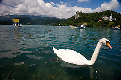 Swan at Lake of Bled with a castle at 54th International rowing Regatta, on June 13, 2009, at Bled lake, Slovenia. (Photo by Vid Ponikvar / Sportida)