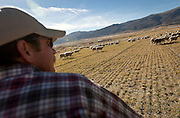 Ryan Cook drives a group of ewes into a neighboring field on his sheep ranch outside Fountain Green, Monday, Nov. 5, 2012.