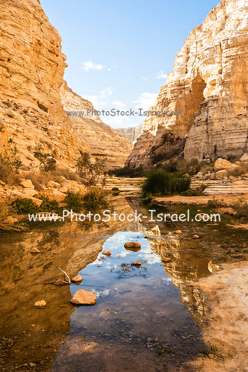 Ein Avdat, sweet water spring at the negev desert, israel
