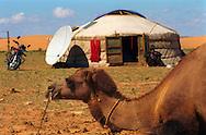 Mongolei, MNG, 2003: ein rastendes Kamel (Camelus bactrianus) vor einer Jurte in Süd-Gobi. Neben dem Zelt stehen Satellitenschüssel und Motorrad. | Mongolia, MNG, 2003: Camel, Camelus bactrianus, resting in front of a yurt (mongolian Ger), modern times with a satellite bowl and a motor bike next to the yurt, South Gobi. |