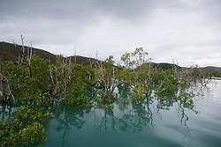 Storm clouds build over the mangroves in Dugong Bay on the Kimberley coast.