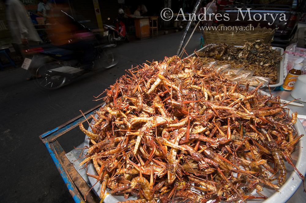 Fried Insects in a Market, Bangkok, Thailand Image by Andres Morya