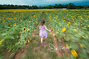 A young girl runs through a field of sunflowers in the Virginia countryside.