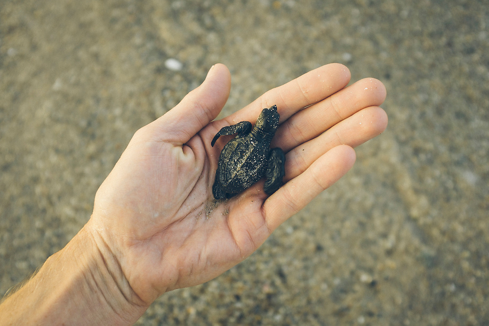 Buenos dias tortuga. Punta Burros, Mexico