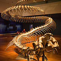 Giant snake in museum