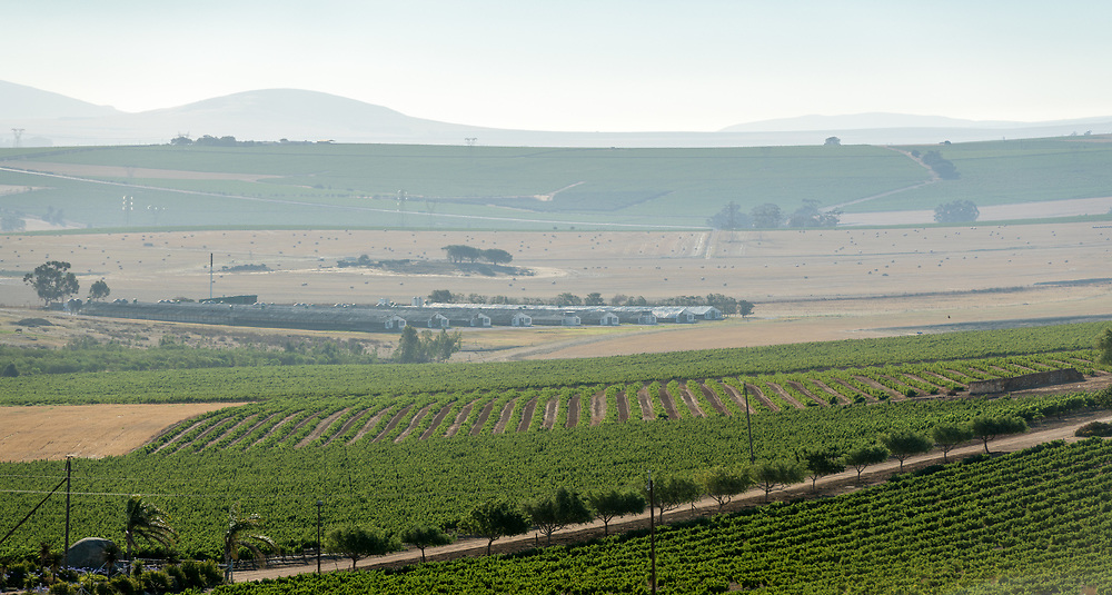 Overview of the vast rural landscape of a vineyard and agricultural buildings located in the slopes of Paarl Mountains, Cape Town, South Africa
