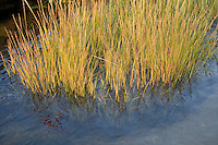 Saltwater marshes along the Connecticut River at Great Island, Old Lyme, CT