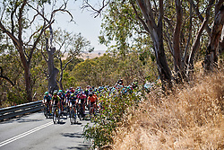 The peloton roll through the Adelaide Hills on Stage 2 of 2020 Santos Women's Tour Down Under, a 114.9 km road race from Murray Bridge to Birdwood, Australia on January 17, 2020. Photo by Sean Robinson/velofocus.com
